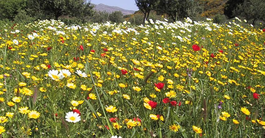 Kreta - Neu entdeckt (Gruppenprogramm)