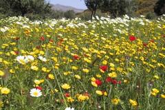Kreta - Neu entdeckt