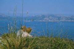 Mallorca-Südküste (ab Calla D`Or) (Gruppenprogramm)