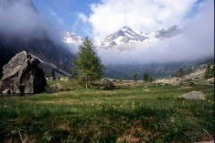 Piemont (Gruppenprogramm)