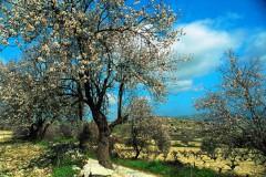 Zypern - Troodos (Gruppenprogramm)